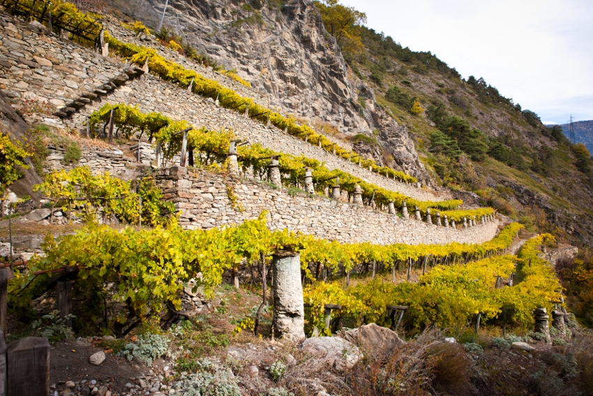 highest vineyards in europe wine tasting tour